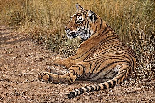 Ranthamboure Road Block Tiger by Alan M Hunt