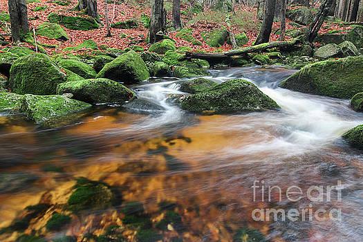 Rapids on Jedlova Brook, Jizera Mountains,  Czech Republic by Michal Boubin