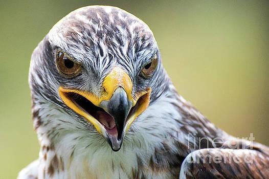 Raptor Power by Eyeshine Photography