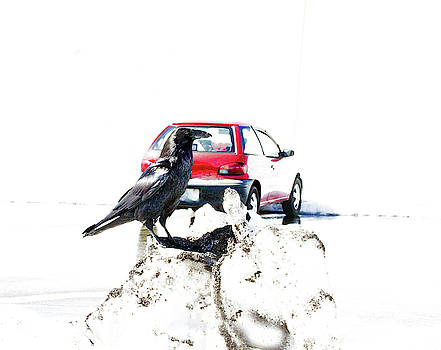 Raven In Snow - Red Car by Marie Jamieson