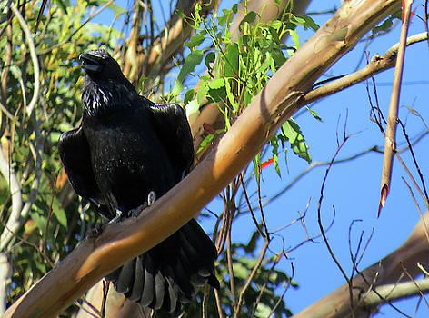 Raven by Lea Cox