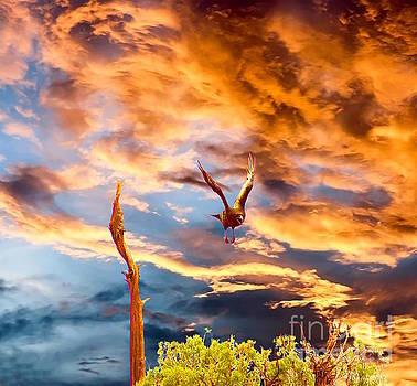 Raven's Flight by Sherry Little Fawn Schuessler