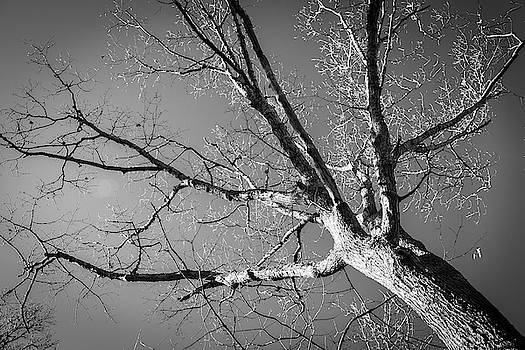 Reach For The Sky by Sharon Mayhak