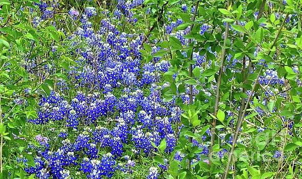 Really Wild Bluebonnets of Texas by Janette Boyd
