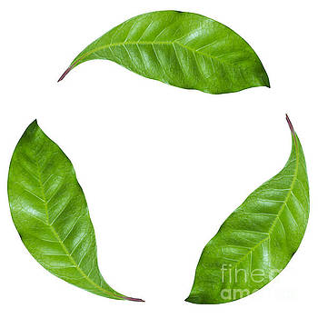 Recycling Leafs J3 by Humorous Quotes