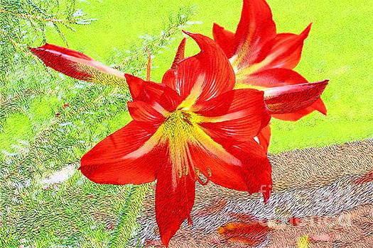 Red Amaryllis by Katherine Erickson