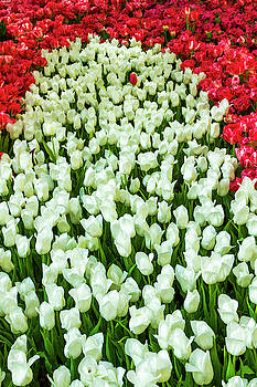 Red and White Tulips Bed by Bonnie Follett