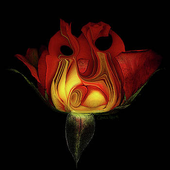 Red and Yellow Rose III by Carel Schmidlkofer