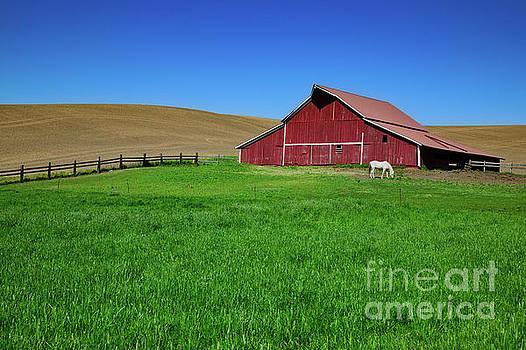 Red Barn by Patti Schulze