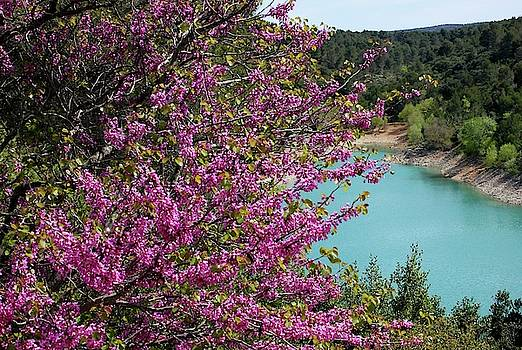 Red Bud and Turquoise Lake by Sarah Lilja