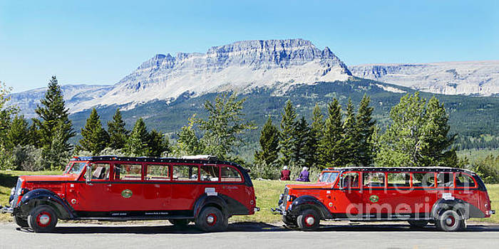 Red Buses, Glacier National Park by Catherine Sherman