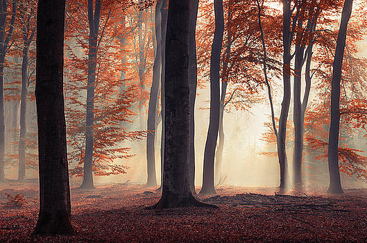 Red fairytale autumn forest by Rob Visser