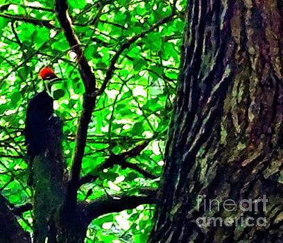 Red Headed Woodpecker by Debra Lynch