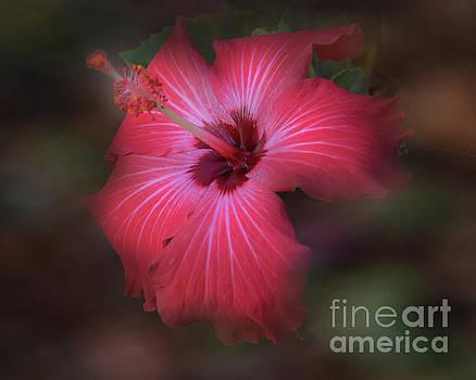 Red Hibiscus by Leticia Latocki