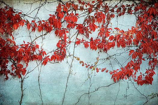 Mary Lee Dereske - Red Ivy