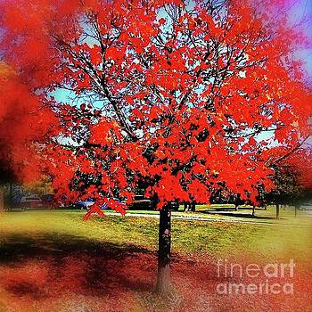 Red Leaves And Shadows by Frank J Casella