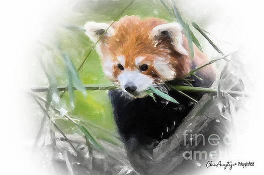 Red Panda by Chris Armytage