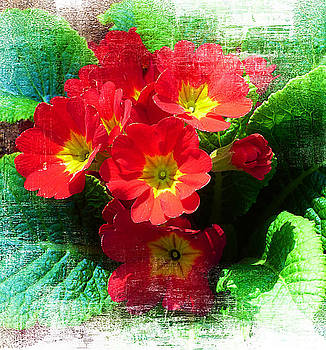 Red Primroses #1 by Trudee Hunter