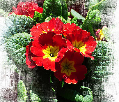 Red Primroses #2 by Trudee Hunter