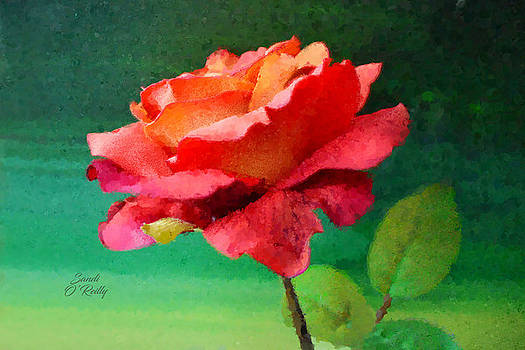 Red Rose Impression by Sandi OReilly