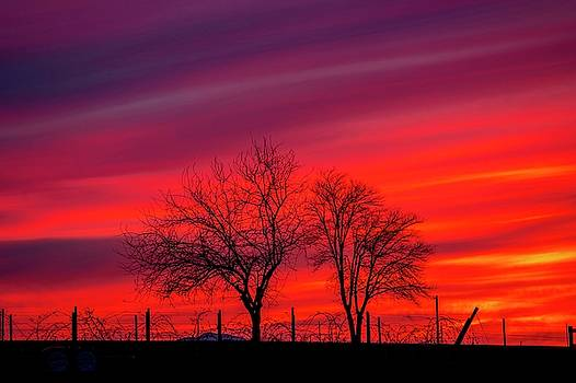 Red Silhouette Sunset by Lynn Hopwood
