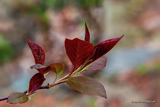 Red Spring Buds by LeeAnn McLaneGoetz McLaneGoetzStudioLLCcom