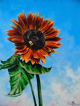 Red Sunflower and Bumblebee by Corinne Palmer