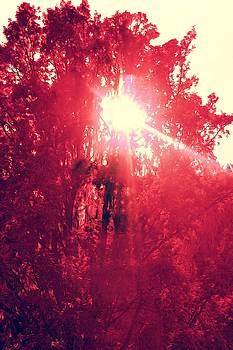 Red Tree by Roman Aj