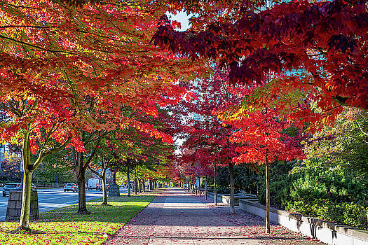 Ross G Strachan - Red Trees