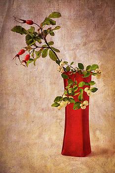 Mary Lee Dereske - Red Vase with Wild Rosehips and Berries