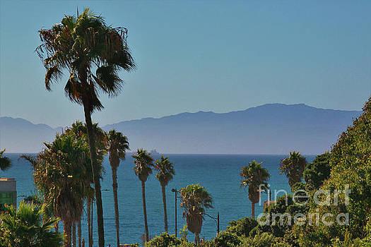 Redondo Beach Palms by Angela Stafford