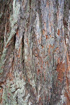 Redwood Bark by Mark Duehmig