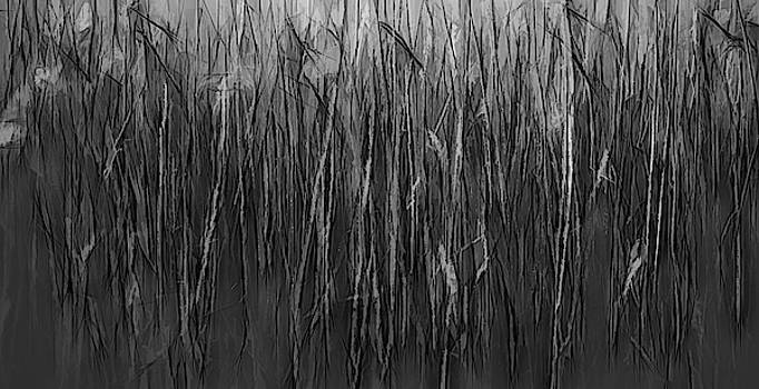 Reeds Abstract BW #i1 by Leif Sohlman