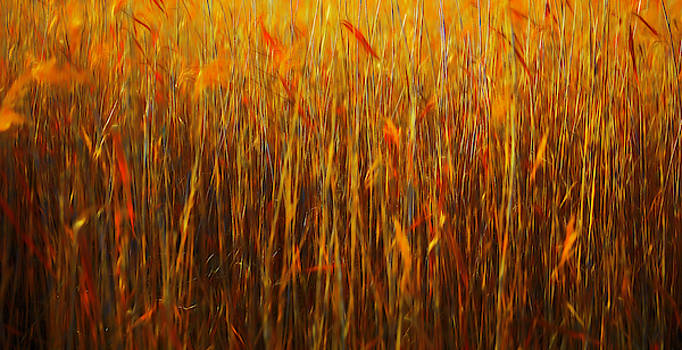 Reeds Abstract #i1 by Leif Sohlman