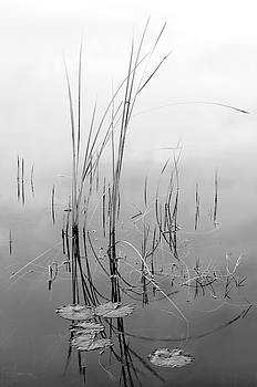 Bill Chambers - Reeds - Grace and Harmony