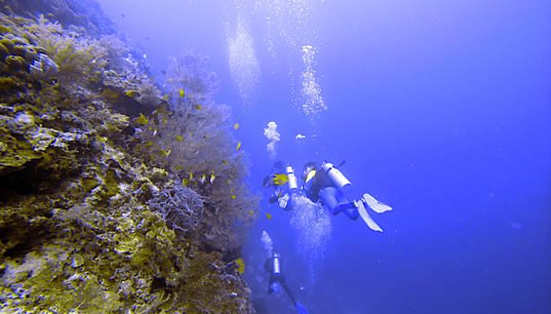 Reef Divers by Paul Ranky