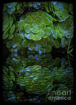 Reflecting A Prolific Plant by Al Bourassa