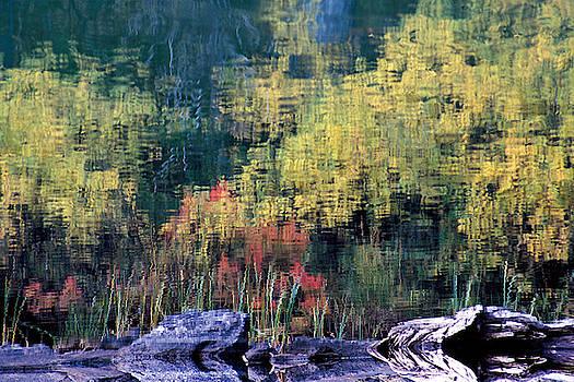 Susan Burger - Reflecting on Nature