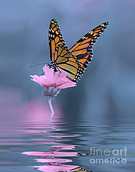 Reflections of a Butterfly by Linda Troski