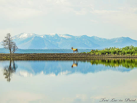 Reflections of Nature by Teri Ridlon