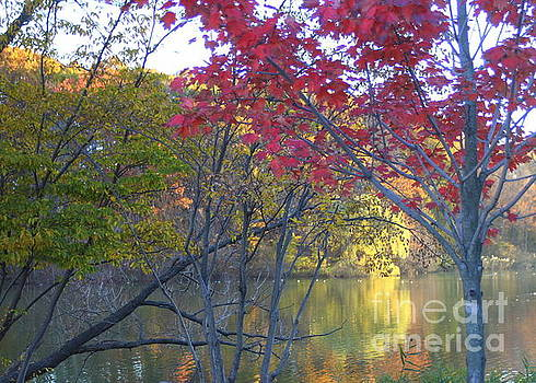 Reflections on an Autumn Day by Dora Sofia Caputo Photographic Design and Fine Art
