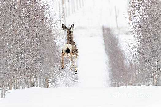 Reindeer in Training by Mike Dawson
