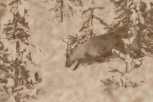 Reindeer moving down a snowy slope - vintage sepia by Intensivelight