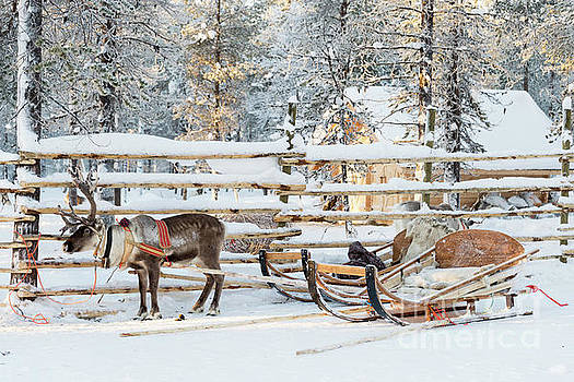 Reindeer sleigh by Delphimages Photo Creations