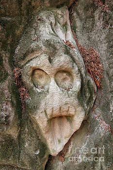 Reliefs of Stone Hollow Road, Czech Republic by Michal Boubin