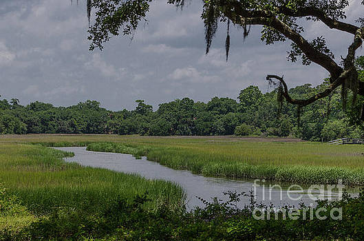 Remley's Point - Salt Marsh by Dale Powell