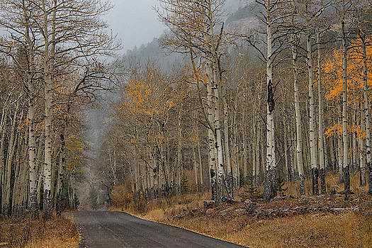 Remnants of Fall by Darlene Bushue