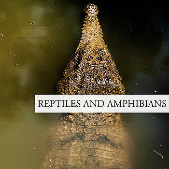 Reptiles and Amphibians by Rob D Imagery