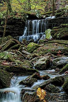 Resting in Nature  by Wesley Nesbitt