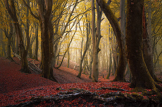 Ret root woods by Rob Visser